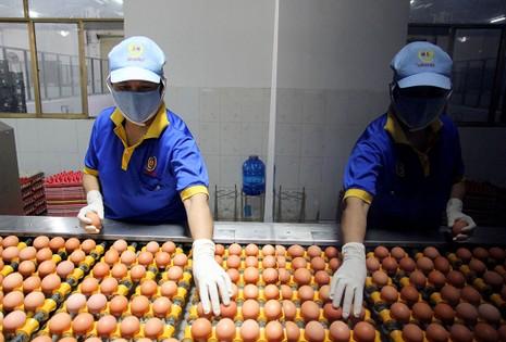 Mặt trận Tổ quốc đi giám sát an toàn thực phẩm  - ảnh 6