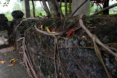 Chùm ảnh: Khu mộ cổ độc đáo gần 200 năm ở Gò Quéo  - ảnh 22