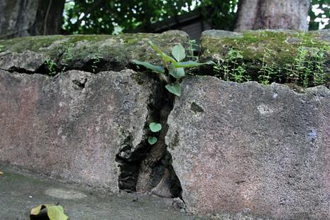 Chùm ảnh: Khu mộ cổ độc đáo gần 200 năm ở Gò Quéo  - ảnh 11