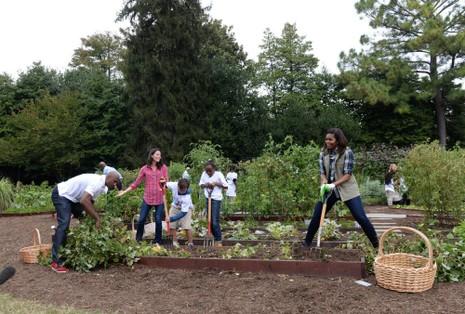 Cầu thủ bóng rổ giải nghệ Alonzo Mourning (trái) dùng tay nhổ khoai tây trong khi Đệ nhất phu nhân Michelle Obama phải dùng chĩa để đào đất.