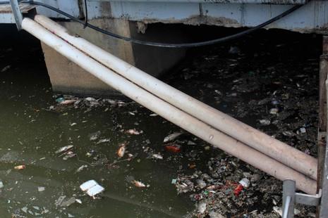 Sáng còn ngoi ngóp, chiều cá đã chết trắng xóa kênh Nhiêu Lộc  - ảnh 3