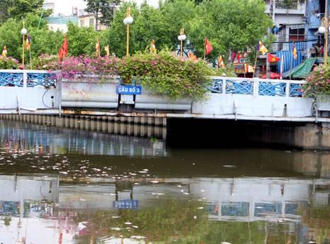 Sáng còn ngoi ngóp, chiều cá đã chết trắng xóa kênh Nhiêu Lộc  - ảnh 7