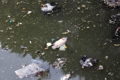 Sáng còn ngoi ngóp, chiều cá đã chết trắng xóa kênh Nhiêu Lộc  - ảnh 4