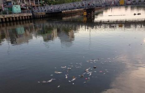 Cá  lại chết hàng loạt trên kênh Nhiêu Lộc – Thị Nghè - ảnh 1