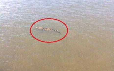 Đang vây bắt cá sấu sổng chuồng bơi trên sông Xoài Rạp - ảnh 1