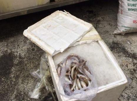 Bắt xe khách chở cá nghi nhiễm độc vào TP.HCM tiêu thụ - ảnh 1