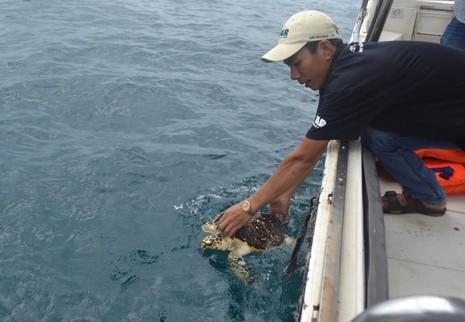 Giải cứu 2 con rùa biển quý hiếm trong quán nhậu - ảnh 2