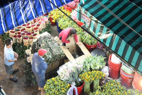 Trước ngày 8-3, chợ hoa Hồ Thị Kỷ có gì hấp dẫn? - ảnh 4