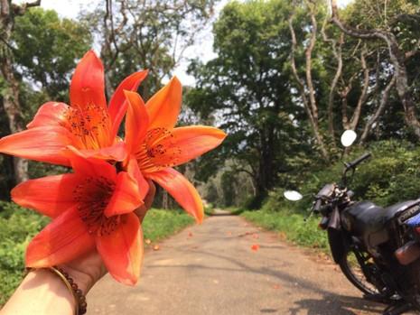 Ngắm hoa gạo đỏ rực trong rừng Cúc Phương - ảnh 11