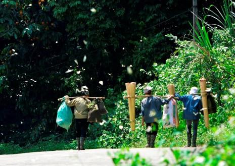 Vào rừng Cúc Phương ngắm bướm bay rợp trời - ảnh 7