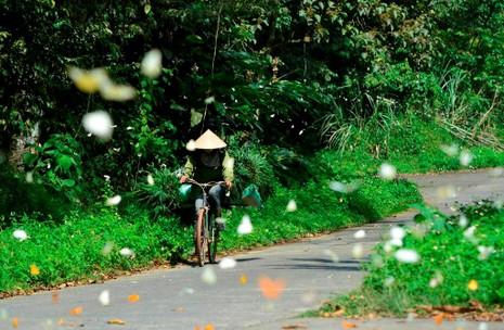 Vào rừng Cúc Phương ngắm bướm bay rợp trời - ảnh 8
