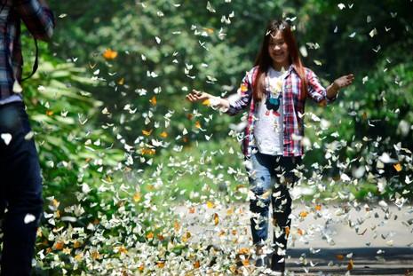 Vào rừng Cúc Phương ngắm bướm bay rợp trời - ảnh 20