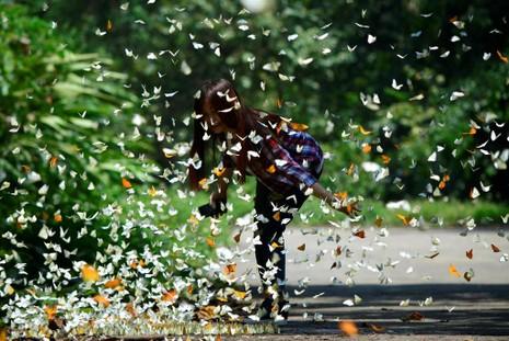 Vào rừng Cúc Phương ngắm bướm bay rợp trời - ảnh 21
