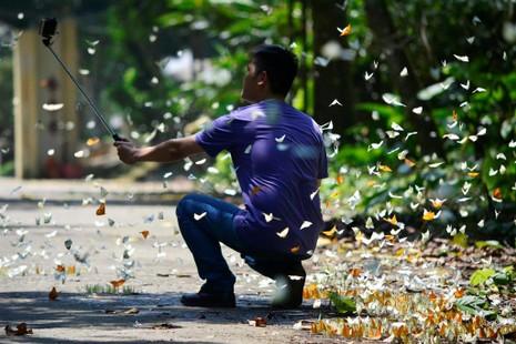 Vào rừng Cúc Phương ngắm bướm bay rợp trời - ảnh 16