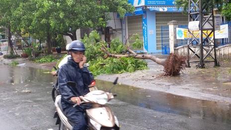 Bão số 3 áp sát, cây gãy đổ la liệt trên đường phố Đà Nẵng  - ảnh 1