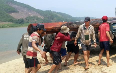 Bắt giữ gỗ lậu cất giấu dưới sông Vu Gia - ảnh 1