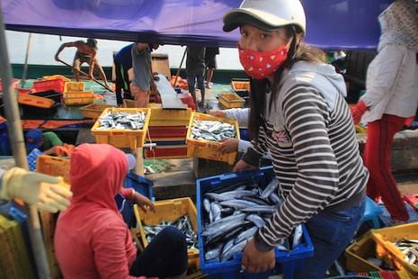 Trên 1.000 cán bộ TP Đà Nẵng sẽ ăn cá vào buổi trưa - ảnh 3