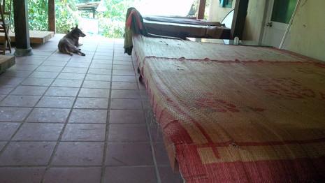 Đà Nẵng: Lại phát hiện chặt phá rừng trên bán đảo Sơn Trà - ảnh 1