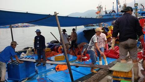 Hơn 2 tỉ đồng hỗ trợ ngư dân, tiểu thương vụ cá biển chết - ảnh 1