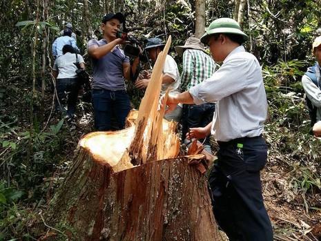 Phó Chủ tịch UBND tỉnh Quảng Nam Lê Trí Thanh kiểm tra hiện trường vụ phá rừng trong ngày 20-7. Ảnh: TH.