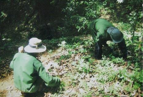 Người dân bảo vệ và trồng cây sâm Ngọc Linh. Ảnh: HT.