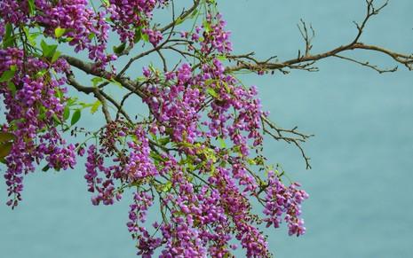 Sơn Trà đẹp ngỡ ngàng trong khoảnh khắc giao mùa - ảnh 12