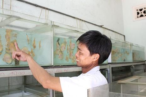 Nông dân Củ Chi nuôi cá dĩa: Nuôi chơi, lời hàng chục triệu đồng - ảnh 2