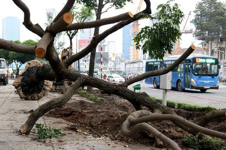 Chùm ảnh: Bứng dưỡng và đốn hạ 75 cây xanh làm metro - ảnh 4