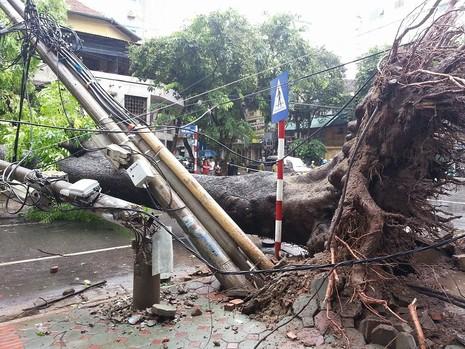EVN cảnh báo nguy hiểm do bão số 1 gây tổn hại lưới điện - ảnh 1