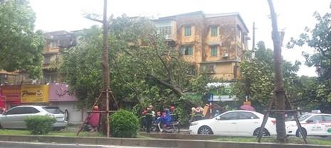 EVN cảnh báo nguy hiểm do bão số 1 gây tổn hại lưới điện - ảnh 3