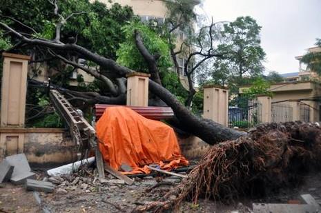 Hà Nội: Cây cổ thụ, cột điện lại gãy đổ sau bão - ảnh 1