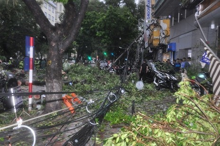 Hà Nội: Cây cổ thụ, cột điện lại gãy đổ sau bão - ảnh 2