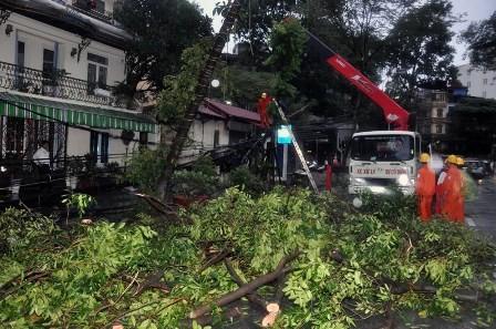 Hà Nội: Cây cổ thụ, cột điện lại gãy đổ sau bão - ảnh 3