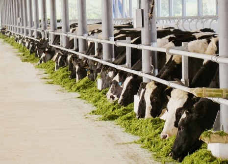 Kỳ tích 40 năm thương hiệu sữa Việt - ảnh 2