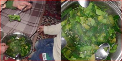 Ăn hết chó mèo, 40.000 người dân Syria ăn cỏ để sống - ảnh 2