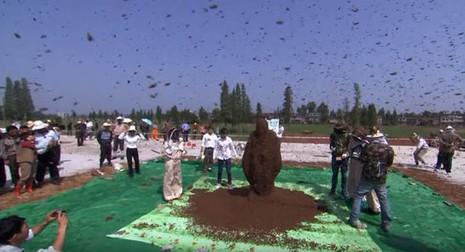 Xem 'dị nhân' để 637.000 con ong bu kín người - ảnh 1