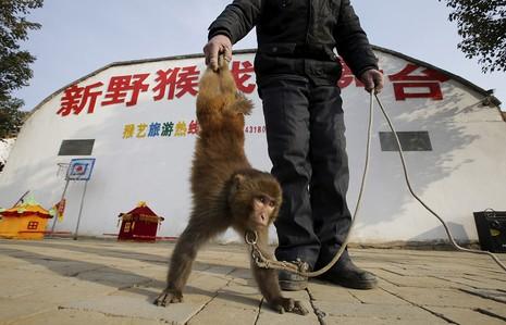 Làng 'tề thiên đại thánh' ở Trung Quốc - ảnh 1
