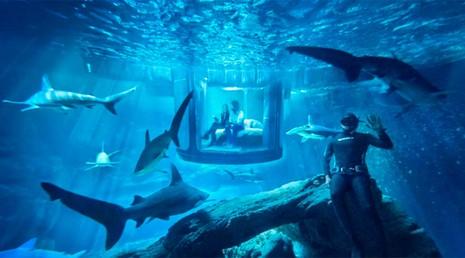 Đến thủy cung ở Paris để ngủ với cá mập  - ảnh 2