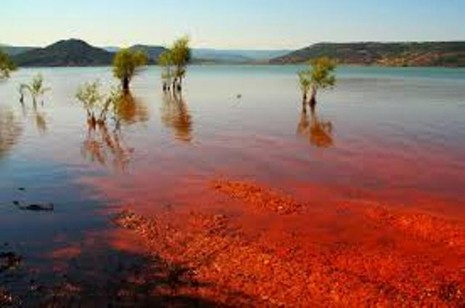Cá chết hàng loạt vì 'thủy triều đỏ', hàng ngàn ngư dân phẫn nộ - ảnh 1
