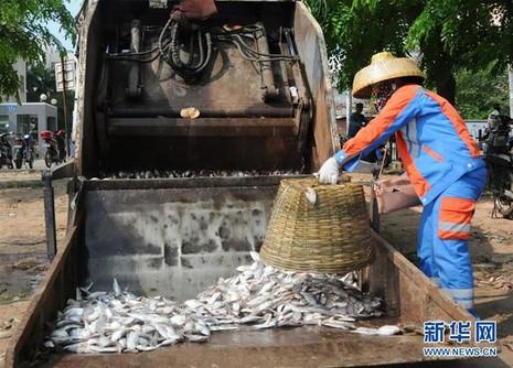 20 tấn cá chết trắng hồ ở Hải Nam, Trung Quốc - ảnh 4