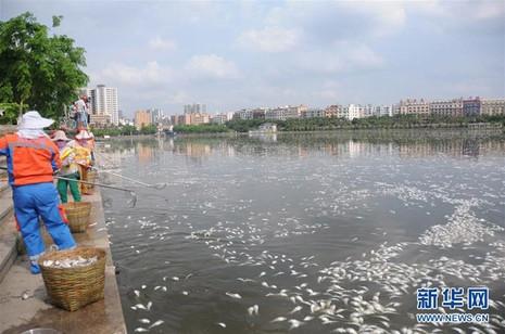20 tấn cá chết trắng hồ ở Hải Nam, Trung Quốc - ảnh 3