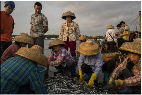 Lần thứ 18, Trung Quốc ngang nhiên cấm đánh bắt cá ở biển Đông - ảnh 1