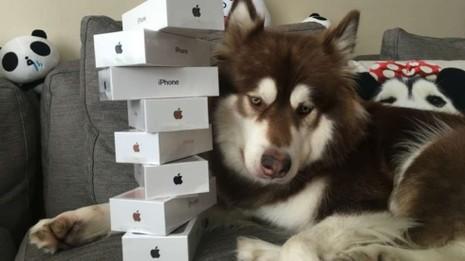 mua iphone 7 cho chó