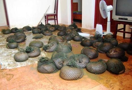 70 động vật quý hiếm 'kêu cứu' vì vướng... Luật Tố tụng hình sự - ảnh 1