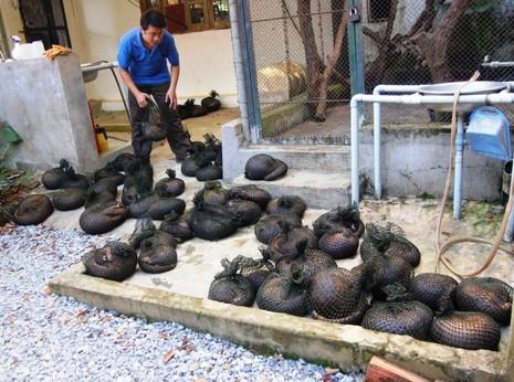 70 động vật quý hiếm 'kêu cứu' vì vướng... Luật Tố tụng hình sự - ảnh 2