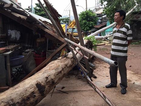 Cây bạch đàn trên đường Phạm Văn Bạch (quận Tân Bình) bỗng nhiên đổ sập trong khi trời lặng gió
