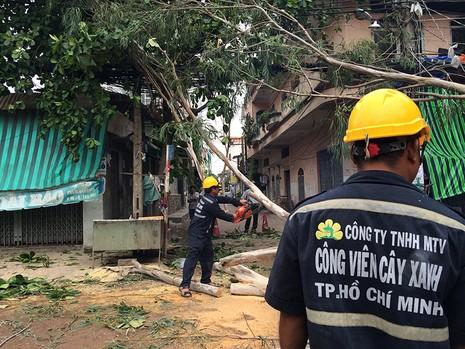 Nhân viên công ty cây xanh TP.HCM có mặt giải quyết hiện trường sau vụ việc