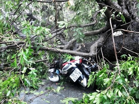 Nạn nhân sau đó đã được người dân đưa đi cấp cứu; chiếc xe máy bị đè hư hỏng.