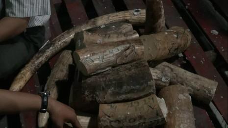 Lô ngà voi tiền tỉ từ Châu Phi nhập cảng Sài Gòn