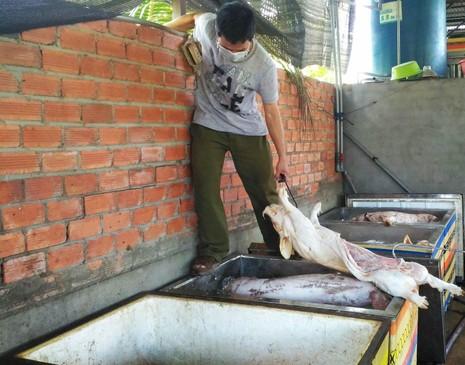 Phát hiện gần 2,5 tấn thịt heo thối chuẩn bị đem đi tiêu thụ - ảnh 1